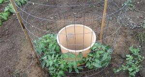 One Man's Genius Idea To Grow Tomatoes