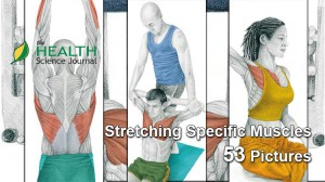 The Art of Stretching – 53 Additional Images to Show You Exactly Which Muscle You Are Stretching (Part 1)
