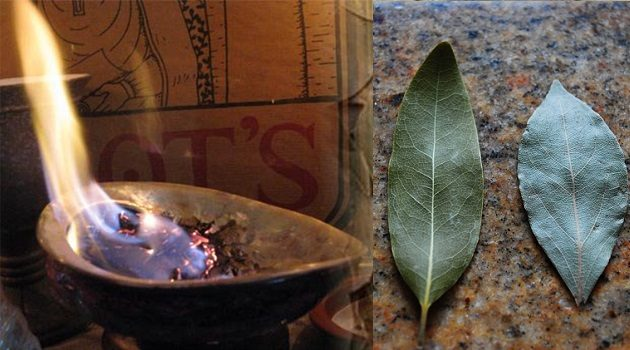 BURN A BAY LEAF IN YOUR HOUSE. THE REASON YOU'LL BE AMAZED