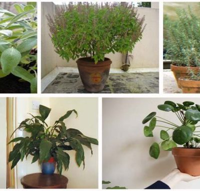 12 PLANTS THAT CREATE POSITIVE ENERGY IN YOUR HOME!