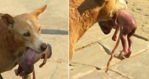 STRAY DOG SHOCKS THE WHOLE COUNTRY BY DOING A MIRACLE!!!