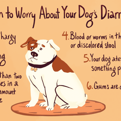 Dog Diarrhea and When Do You Need to Call the Vet